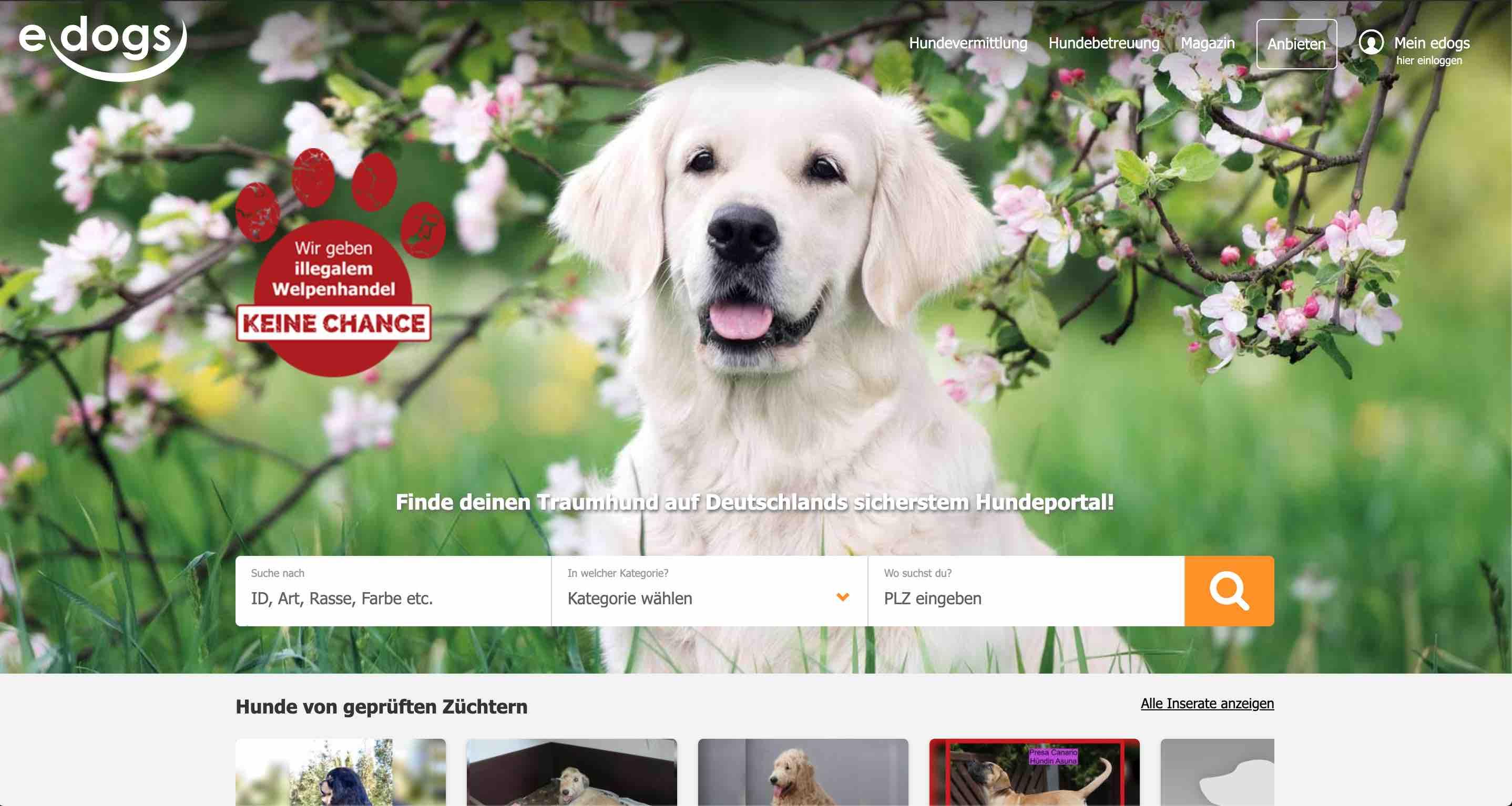 Lokalzeitung NOZ Mediens Hunde Website Image